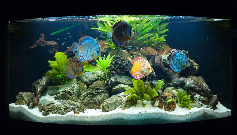 top 10 external aquarium filters ebay