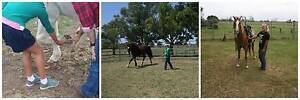 Horsey Fun Days! Clybucca Kempsey Area Preview
