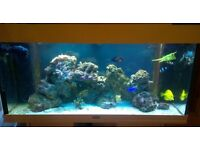 Marine Aquarium and Stand with Live Rock, Corals and Fish