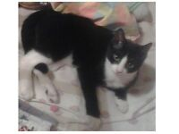 Missing black and white small cat