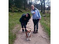 Friendly & Experienced Dog Walker
