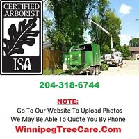 ★ ★ ★ Need Tree Care Services | Free Quote | (204) 318-6744