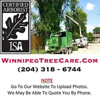 ★ ★ ★ NEED TREE REMOVAL or PRUNING SERVICE (204) 318-6744