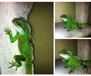 Water dragon kijiji free classifieds in alberta find a for Chinese furniture kijiji alberta