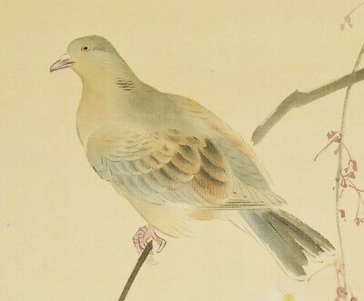 JAPANESE PAINTING Pigeon HANGING SCROLL 70