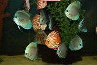 Discus and wide variety of tropical fish & aquariams for sale