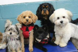 Grooming available at our new Dartmouth Jollytails!