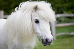 Looking to buy a pony