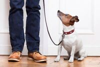 Private in-home dog training throughout the Niagara region