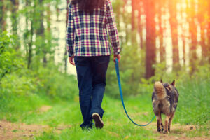 Job wanted. Dog walking.