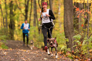 Learn To Run or Bike with your dog