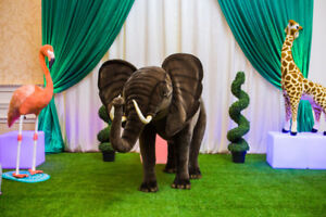 Elephant for sale or rent ride on birthday party indoors