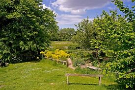 Cook/ senior assistant in a busy cafe serving a plant nursery and gardens in a beautiful location.