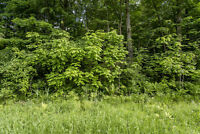 Backing Trees, Minutes to the Beach-Lot 13 Breithaupt Cres,Tiny