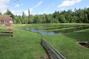Cabin and fish farm on 8 acres! Strathcona County Edmonton Area image 4