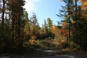 Beautiful Tree'd Building Lot near Buckhorn! Quiet Subdivision