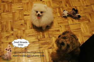 SLEEPOVER & PLAYDATES FOR SMALL DOGS CAGE-FREE West Island Greater Montréal image 5