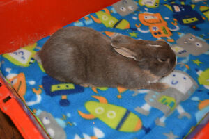 Rabbit Cage Liners with Free Small Bag of Treat Hay!