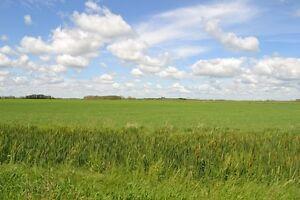 Ranch/Mixed Farm/Cattle/Cows/Grain Regina Regina Area image 6