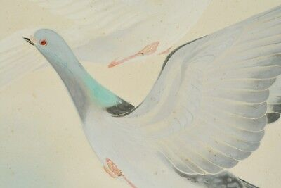 JAPANESE PAINTING Pigeon HANGING SCROLL 55.9