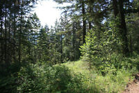 LOT FOR SALE - 10622 Pinecrest Rd, Vernon