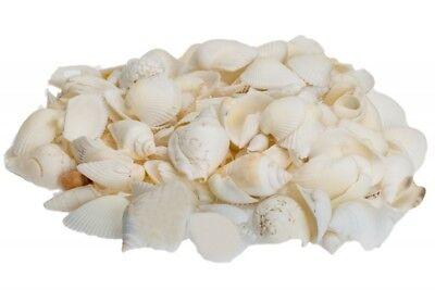 NaDeco® Muschelmix weiß 1kg | weiße Muscheln | Bastelmuscheln |  Dekomuscheln |