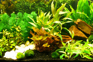 100s of Aquarium Plants