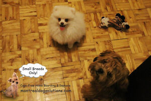 *FULL* MONTREALDOGSOLUTIONS.COM-Cage free boarding small K9's West Island Greater Montréal image 4