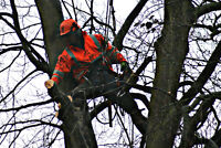 LOOKING FOR ARBORISTS WITH CLIMBING EXPERIENCE