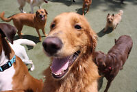 DOGGY DAY CARE AND BOARDING