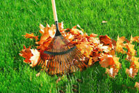 Leaf Cleanups / Garden Cleanups - Starting At $40