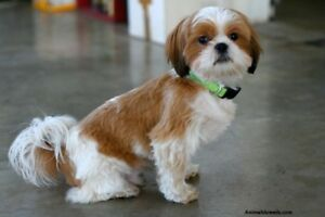 Discount Doggy Grooming - Sm Only $35 Tx Inc.