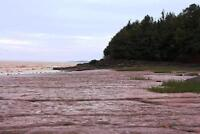1200 feet of waterfront on Bay of Fundy, NB! 61+ acres! Ocean
