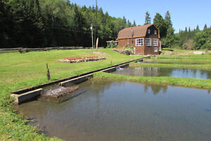 Cabin and fish farm on 8 acres! Strathcona County Edmonton Area image 6