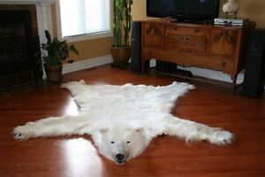 Peau d'ours polaire / Polar bear skin