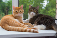 Going on vacation? Who will look after your pet? Petsitter 4HIRE
