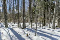 Build With a View of the Lake - 1470 Champlain Rd. Tiny ON