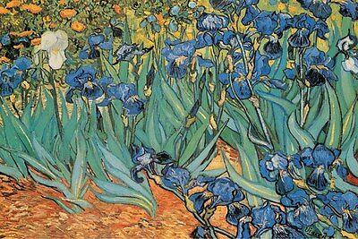 """Vincent Van Gogh art poster 24x36"""" Garden of Irisis"""