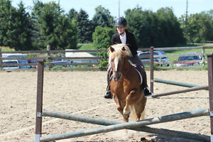 Lovely pony for Riding lessons :) Kitchener / Waterloo Kitchener Area image 7