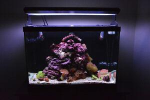 65 gal Reef Aquarium Part-out