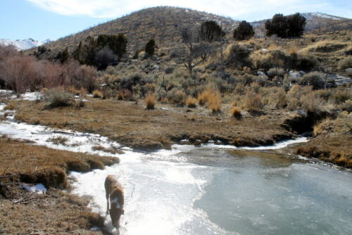 Historic Thacker Placer Gold Mining Claim Pershing County NV Near Mill City