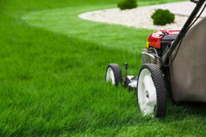 Grass Cutting & Lawn Care