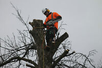Tree Trimming Pruning - Tree Removal - Expert Tree Care