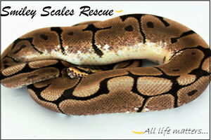 Smiley Scales Rescue needs your help!