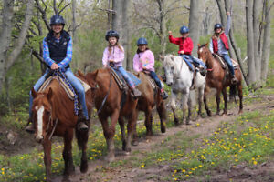 HorsePlay Niagara Holiday Gift Certificate Promotion