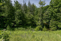 Private Lot Surrounded By Trees - Wainman Line, Orillia ON