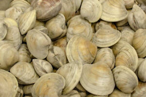 Clam licence
