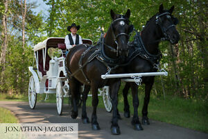 Horse Drawn Wedding Carriage and Sleigh Edmonton Edmonton Area image 5