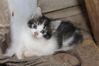 Great Kittens for Sale!