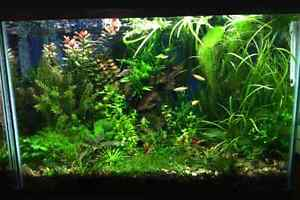 Looking to Buy Aquarium Plants
